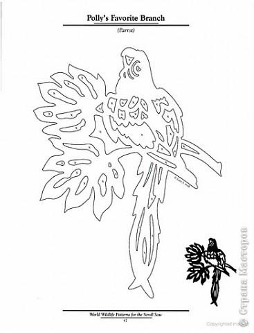 Попугай на веточке. фото 3