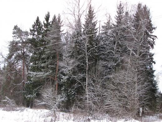 Зима фото 5