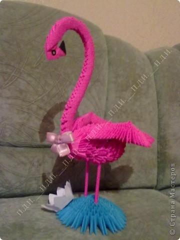 Розовый фламинго-3.