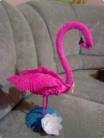 Розовый фламинго фото 3