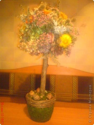 вот и мы соорудили дерево из осенних подарков природы фото 1