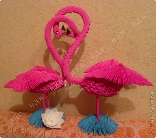 Пара фламинго :) фото 2