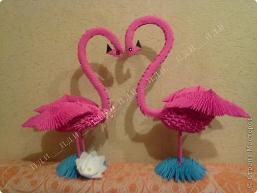 Пара фламинго :) фото 1