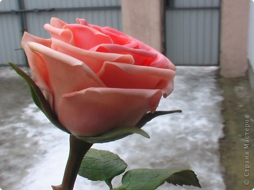 Роза из самоварного ХФ фото 2