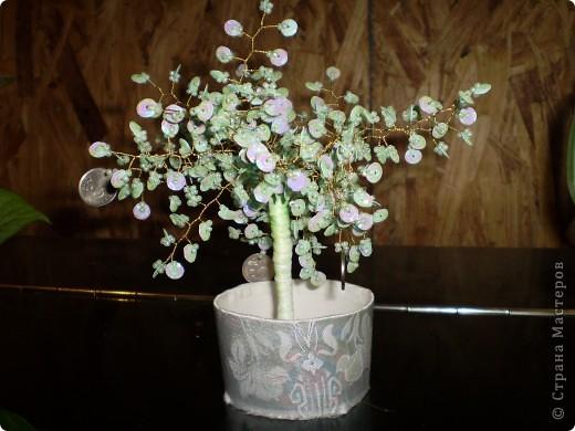 денежое дерево