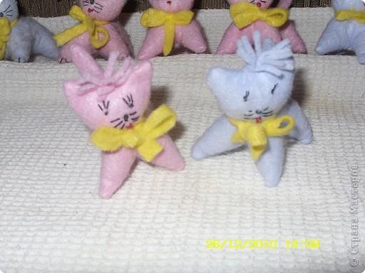Вот такие котята отправятся к Даниным друзьям фото 2