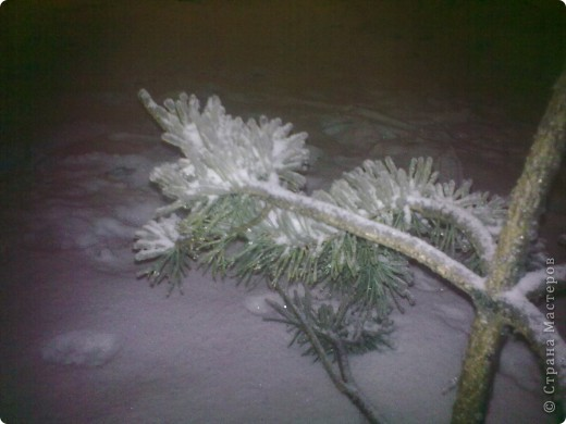 ледяные тропики!!! фото 6