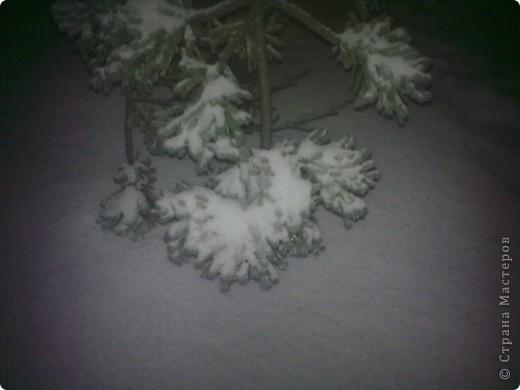ледяные тропики!!! фото 9