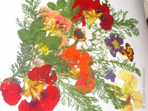 Летом мы с дочкой сделали вот такое панно из живых цветов. фото 1