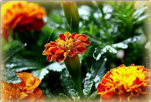Немного ярких красок среди зимы... фото 1
