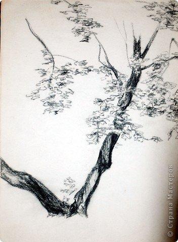 Этот портрет нарисован кажется сангиной, такой черный художественный мелок фото 13