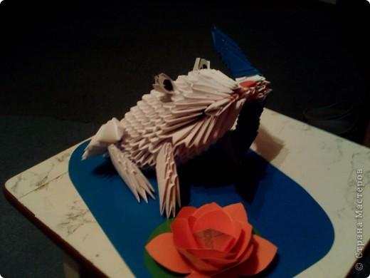 Лягуха фото 2