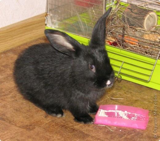 Вот, какой зайчишка у меня пошился)) фото 7