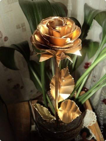 алая роза фото 2