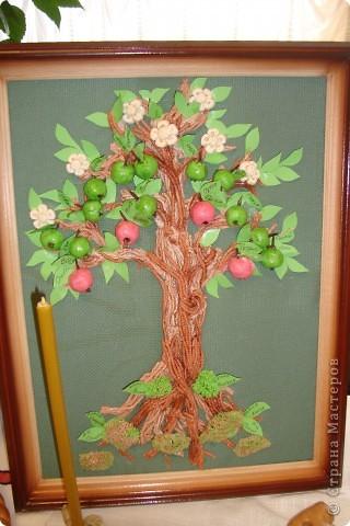 Дерево рода. фото 1