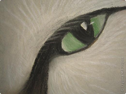 Кошачий глаз фото 3