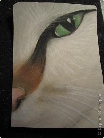 Кошачий глаз фото 2