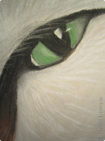 Кошачий глаз фото 5