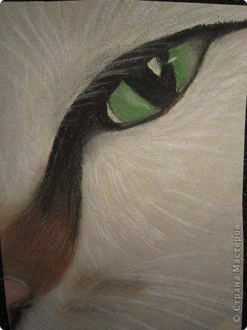 Кошачий глаз фото 4