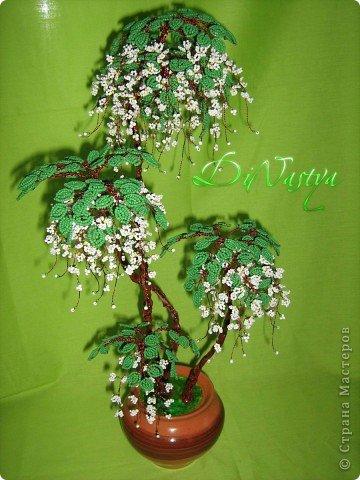 Дерево Жасмин