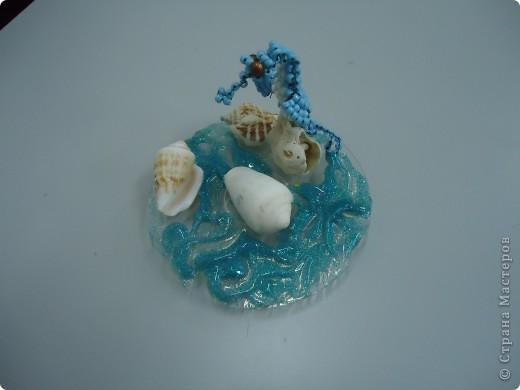 Морской конек фото 2