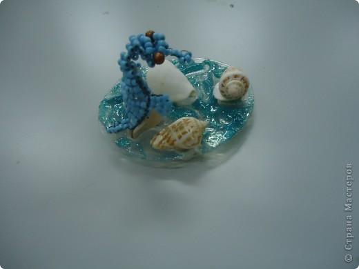 Морской конек фото 3