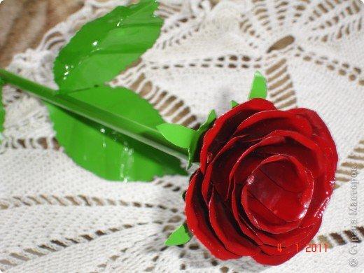 алая роза фото 1