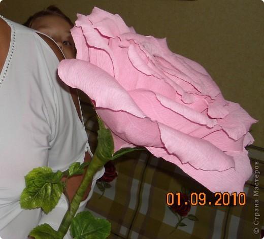 Розы поставлены на поток... Очень выручают! фото 1