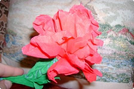 цветы розы фото 1