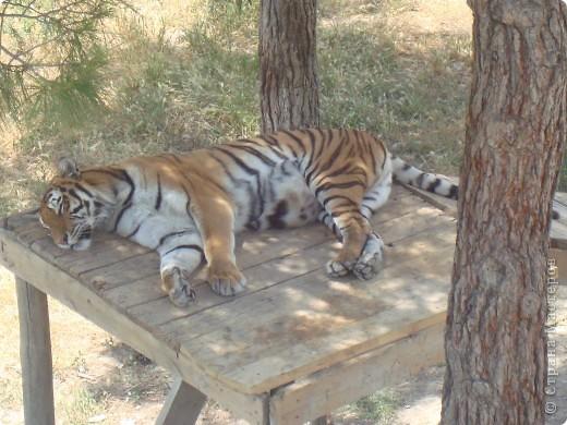 Летом 2009 года мы впервые побывали в Геленжикском Сафари-парке, хотя и живем неподалеку )))... фото 2