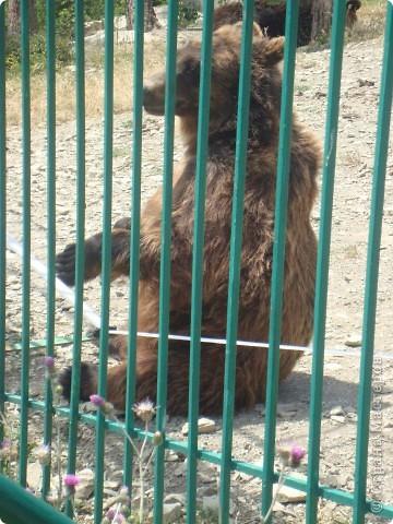 Летом 2009 года мы впервые побывали в Геленжикском Сафари-парке, хотя и живем неподалеку )))... фото 7