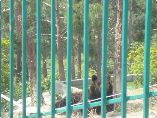 Летом 2009 года мы впервые побывали в Геленжикском Сафари-парке, хотя и живем неподалеку )))... фото 9