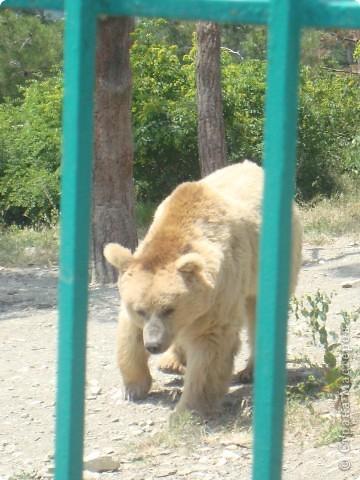 Летом 2009 года мы впервые побывали в Геленжикском Сафари-парке, хотя и живем неподалеку )))... фото 6