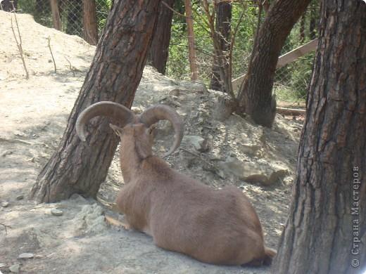 Летом 2009 года мы впервые побывали в Геленжикском Сафари-парке, хотя и живем неподалеку )))... фото 3