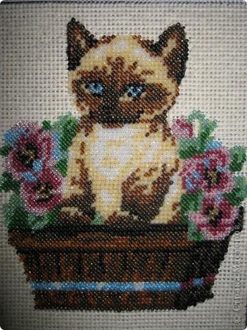 Бисерный котенок