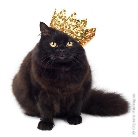 Год кошки