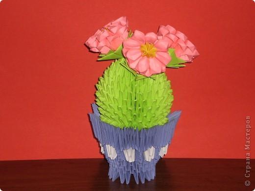 мои цветущие кактусы фото 2
