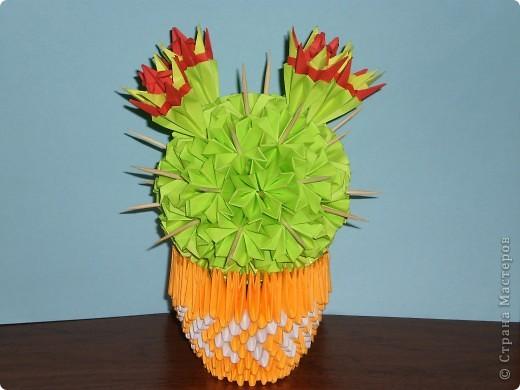 мои цветущие кактусы фото 1