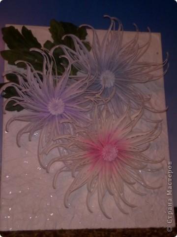 Снежные хризантемы. фото 7