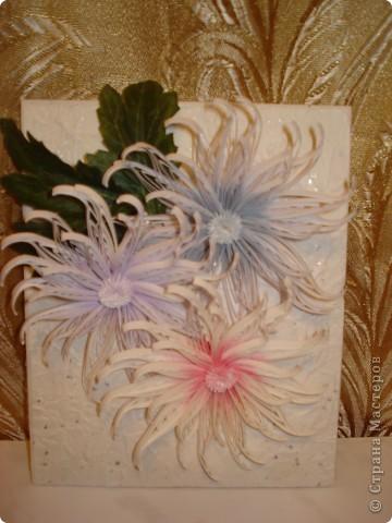 Снежные хризантемы. фото 2