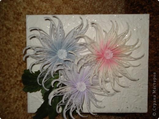 Снежные хризантемы. фото 1