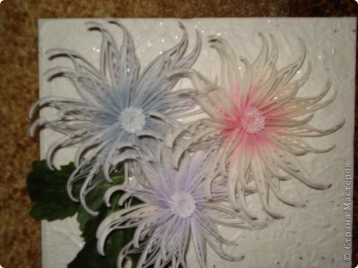 Снежные хризантемы. фото 3