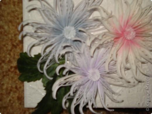 Снежные хризантемы. фото 6