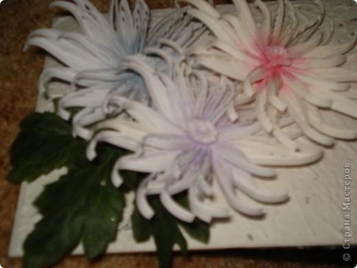 Снежные хризантемы. фото 4