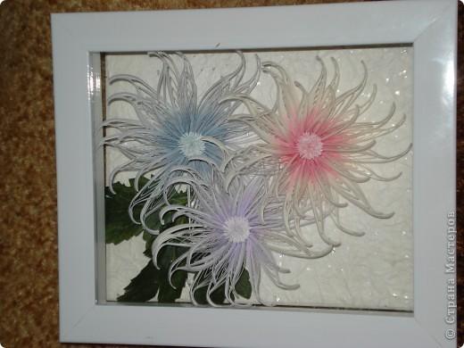 Снежные хризантемы. фото 5