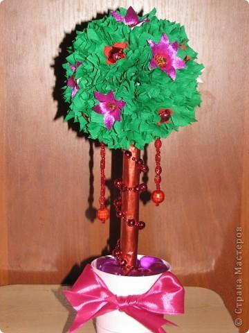 Малиновое дерево фото 1
