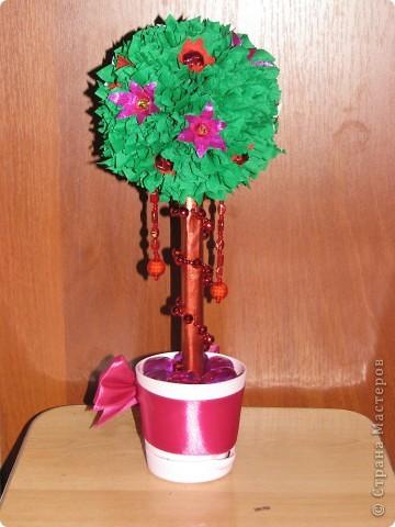 Малиновое дерево фото 6