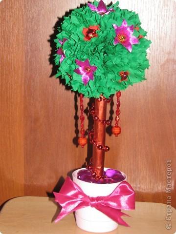 Малиновое дерево фото 7