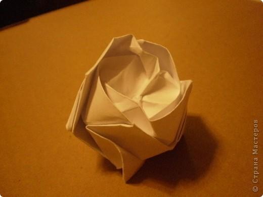 Роза Кавасаки-я ЕЁ,все таки научилась делать- спасибо учителю- svarnoi-02 фото 2