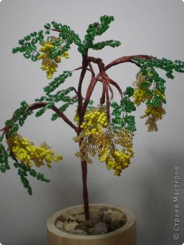 дерево акации это моя первая работа с бисером